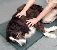 BARC: Massage